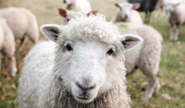 Nachhaltige & faire Wolle: Für uns ein Muss